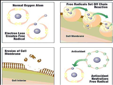 antioxidants-fight-free-radicals