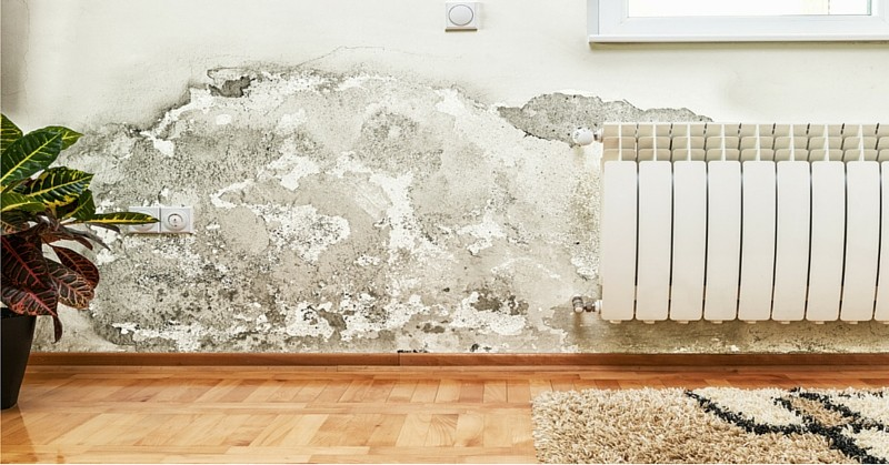 the-hazards-of-toxic-mold